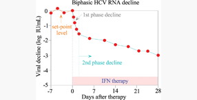 Biphasic HCV RNA decline after IFN treatment of chronic hepatitis C. Vol. 30,  Iss. 2, Treatment of Hepatitis C Virus Infection with Interferon and Small Molecule Direct Antivirals.